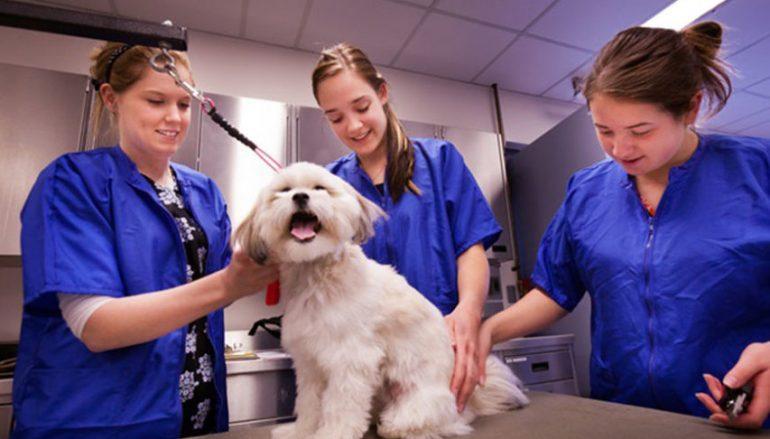 Necessary information about preventative animal care!