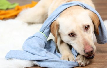 Signs That Your Dog is Bored and How to Deal With It