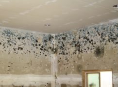 Mold vs. Mildew: What's The Difference And How To Deal With Both Following Water Damage